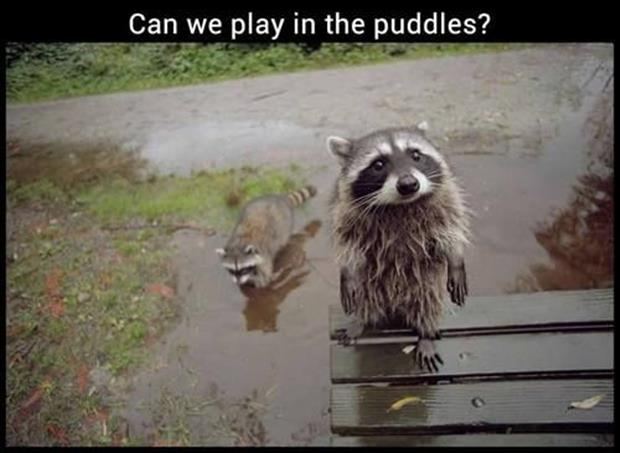 can we play in the puddles