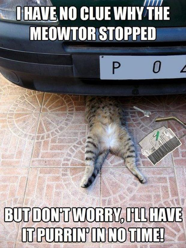 cat fixing the car
