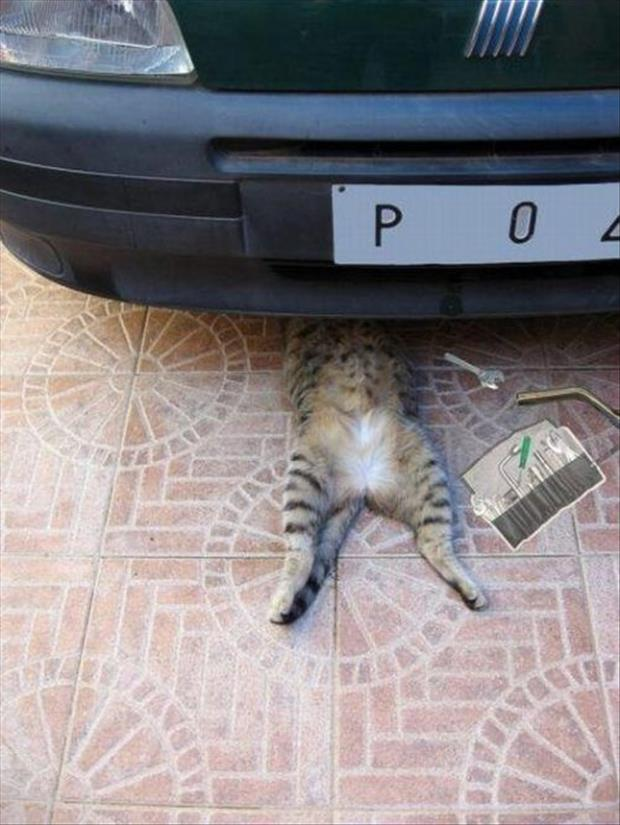 cat fixing your car