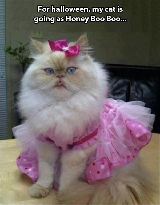 cat looks like honey boo boo