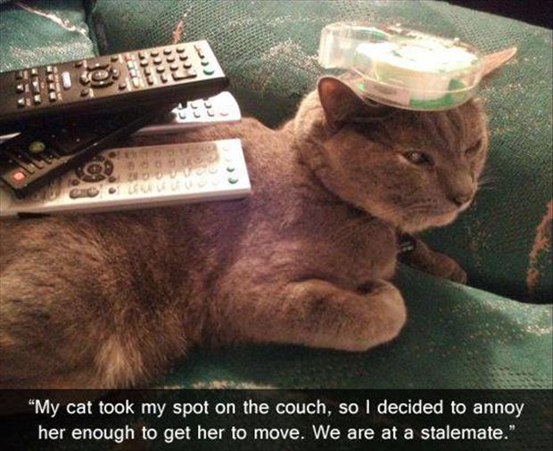cat on the couch