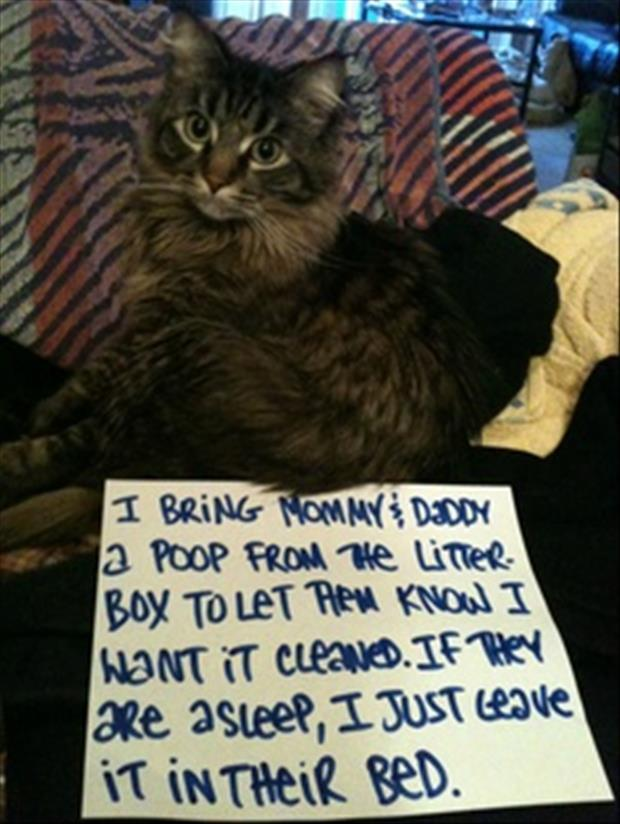 cat shaming litter box