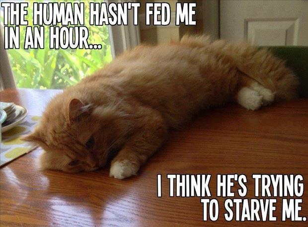 cat thinks human is trying to not feed him