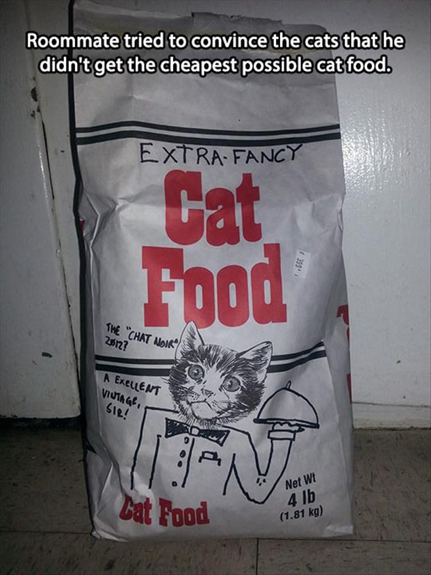 cheap cat food funny pictures