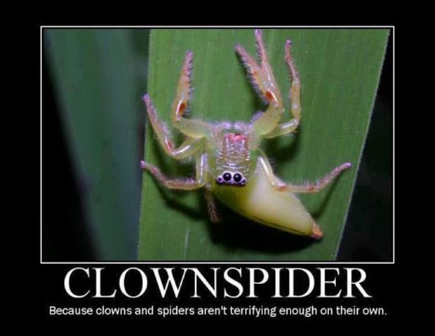 clown spider