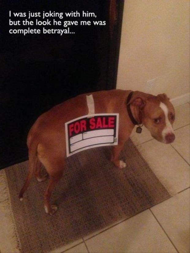 dog for sale