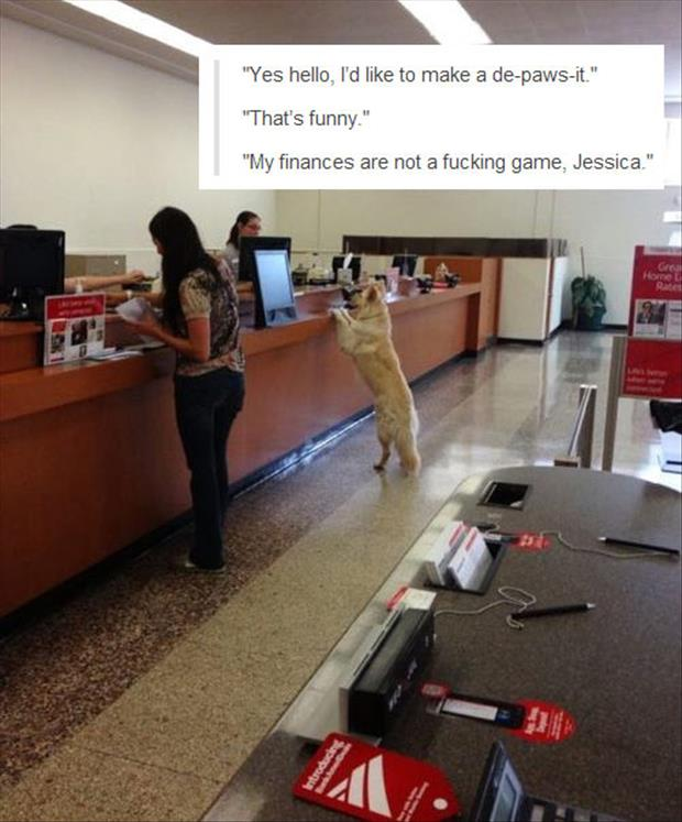 dog in bank