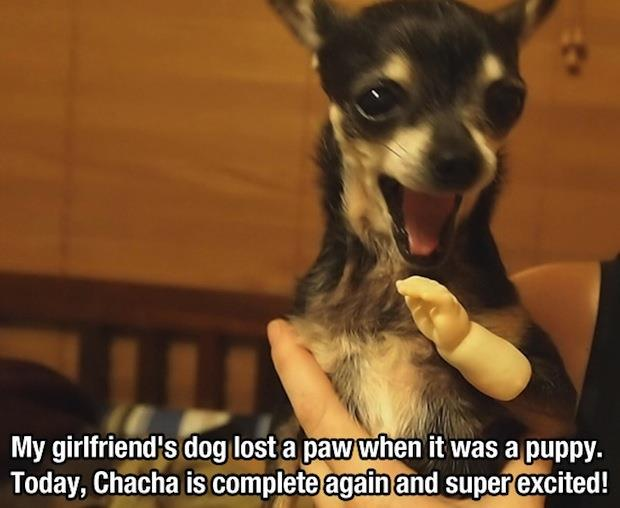 dog lost its paw