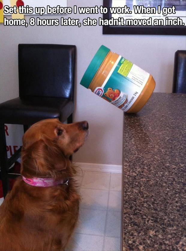 dog love peanut butter