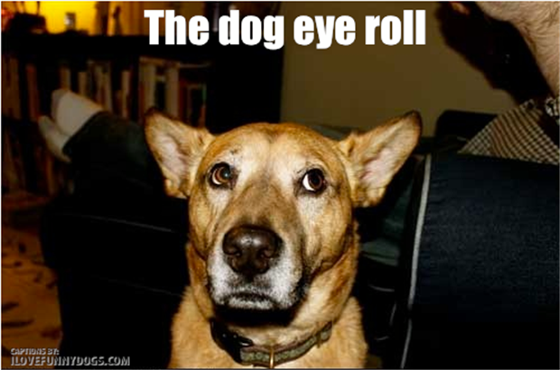 dog rolling his eyes
