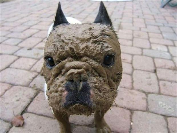 dog with mud pack