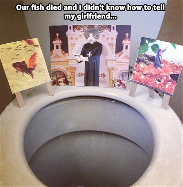 fish died funny pictures