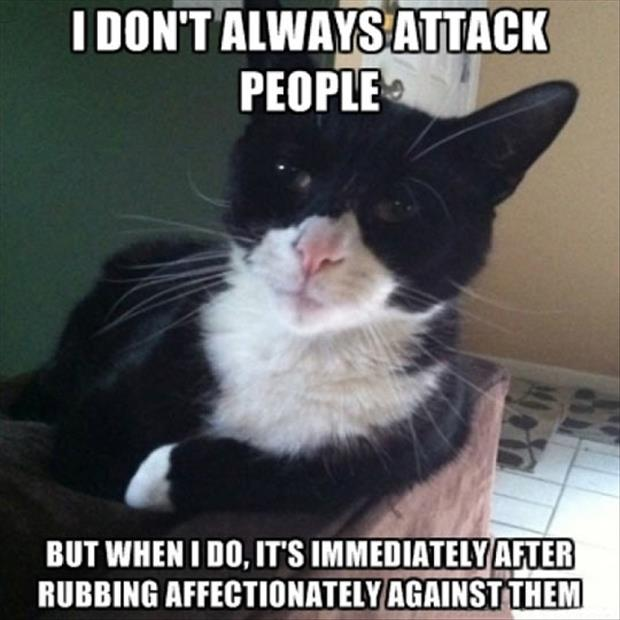 funny cat attacks