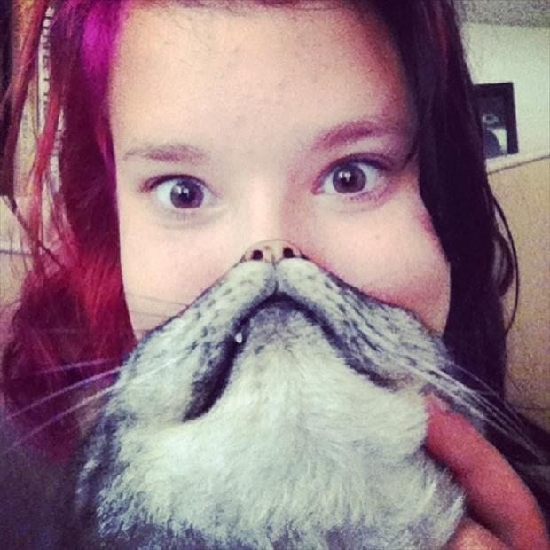 funny cat beard pictures, dumpaday (1)