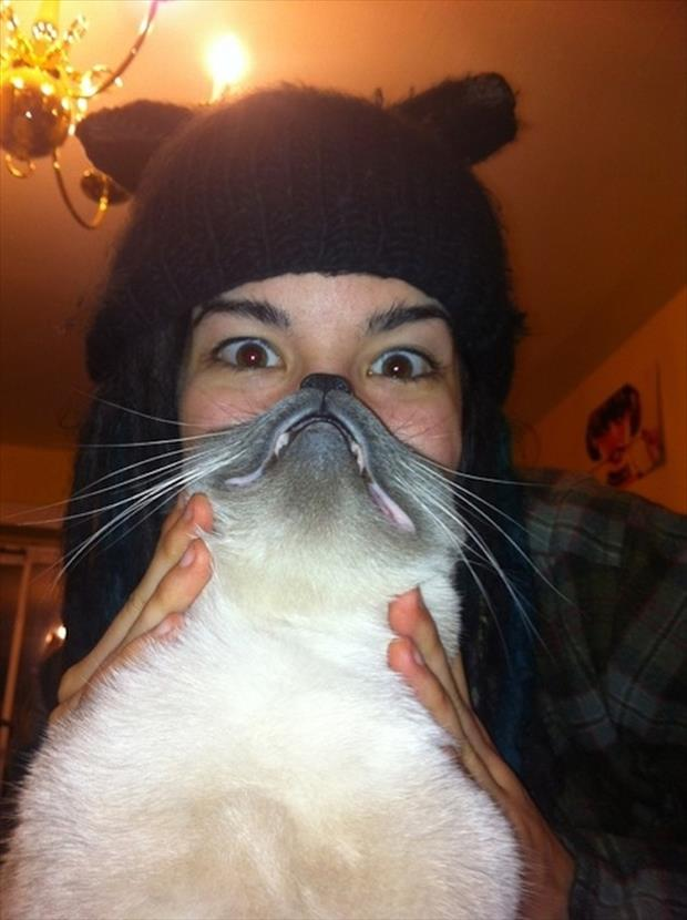 funny cat beard pictures, dumpaday (13)