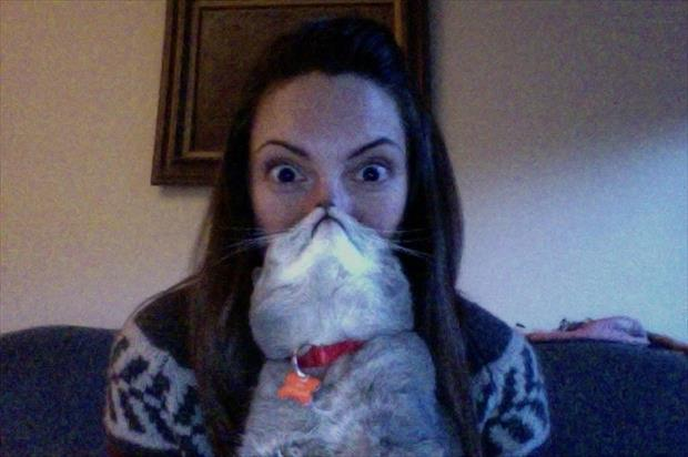 funny cat beard pictures, dumpaday (15)