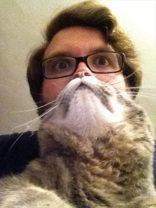 funny cat beard pictures, dumpaday (16)