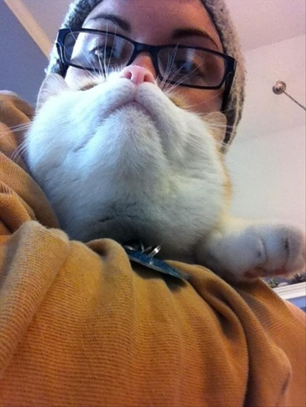 funny cat beard pictures, dumpaday (18)