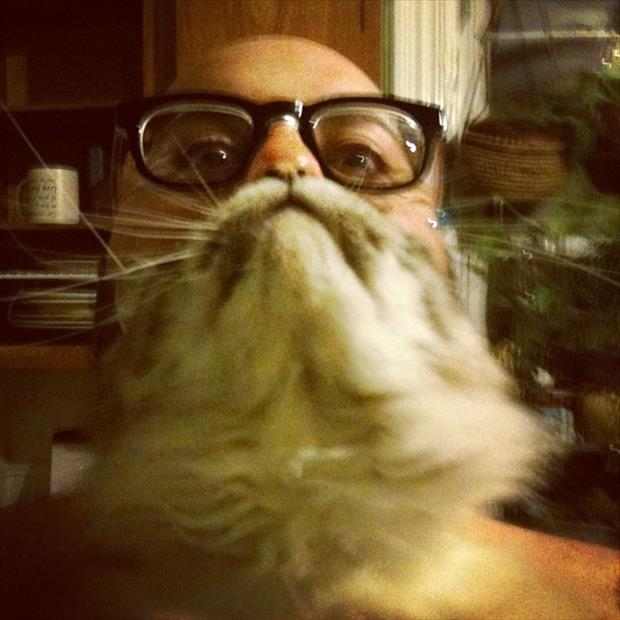 funny cat beard pictures, dumpaday (19)