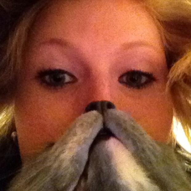funny cat beard pictures, dumpaday (20)