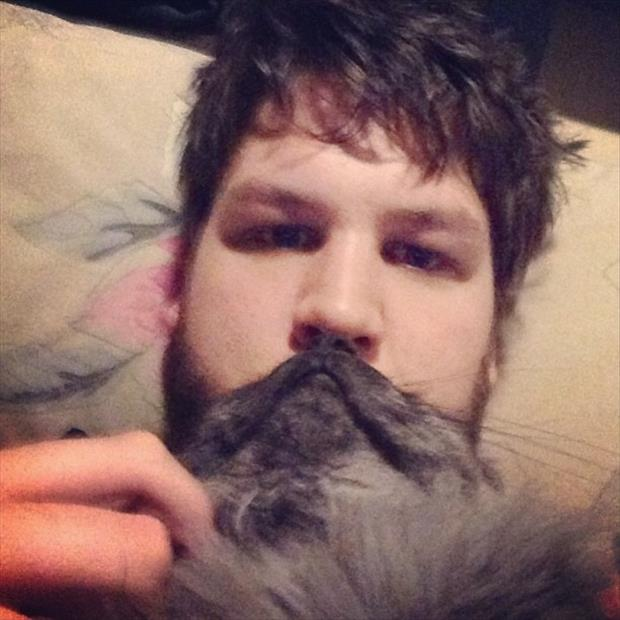 funny cat beard pictures, dumpaday (21)