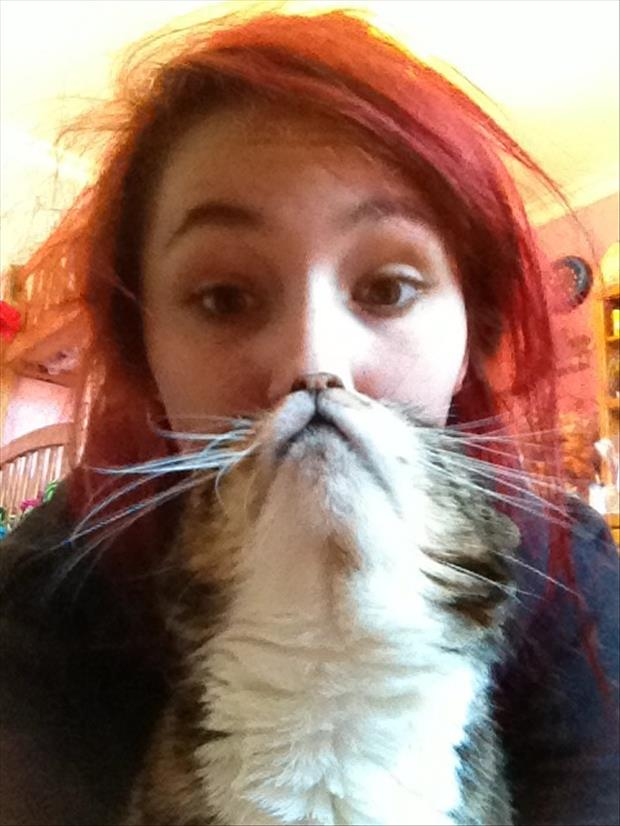 funny cat beard pictures, dumpaday (23)