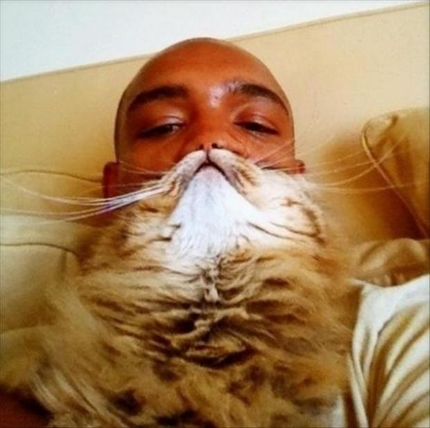 funny cat beard pictures, dumpaday (5)