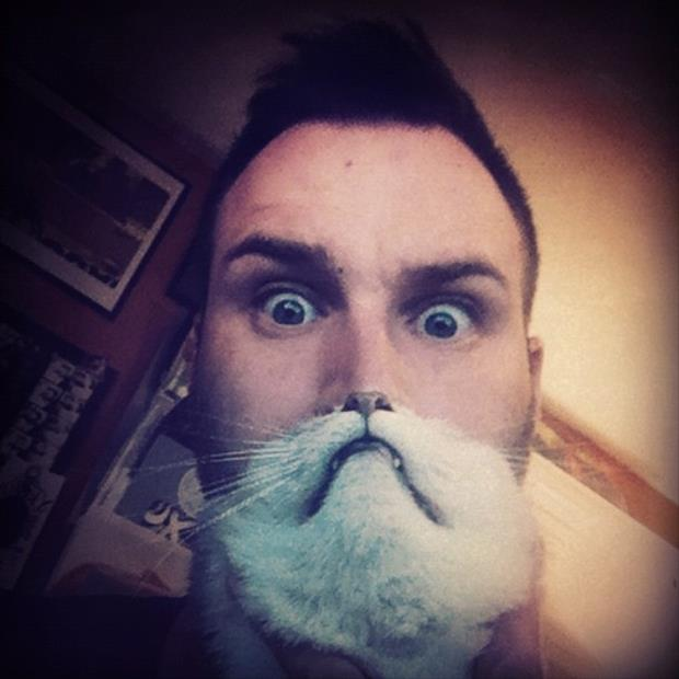 funny cat beard pictures, dumpaday (6)