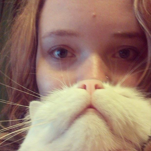 funny cat beard pictures, dumpaday (8)