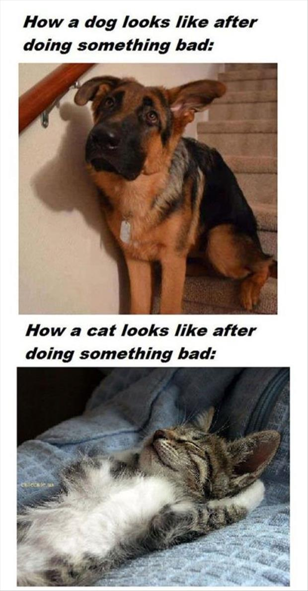 funny dogs vs cats