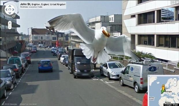 funny google map pictures, dumpaday (28)