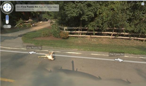 funny google map pictures, dumpaday (8)