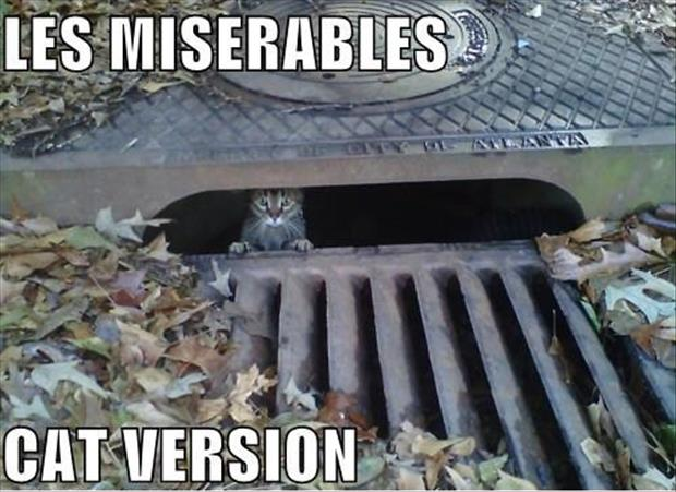funny-les-miserables-cat-version-stuck-down-drain-pics