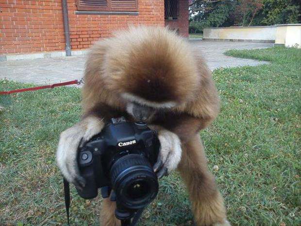 funny monkey with camera
