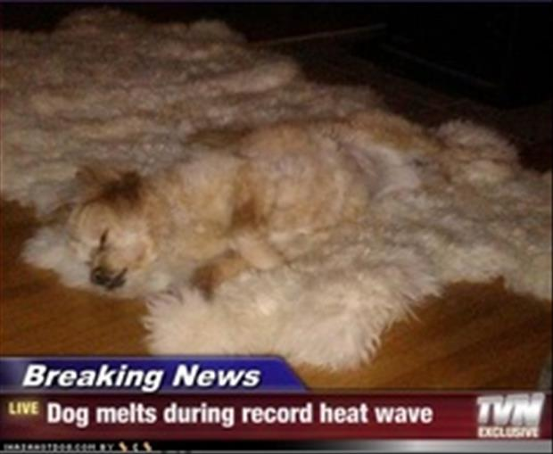 funny news captions, dumpaday (12)