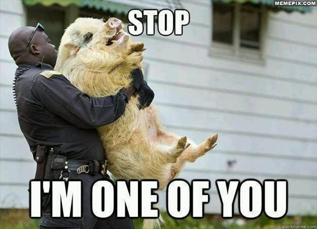 funny pictures cops are pigs