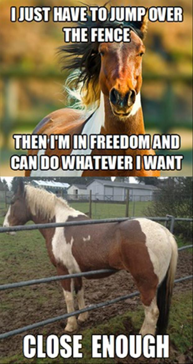 funny pictures horse stuck in fence