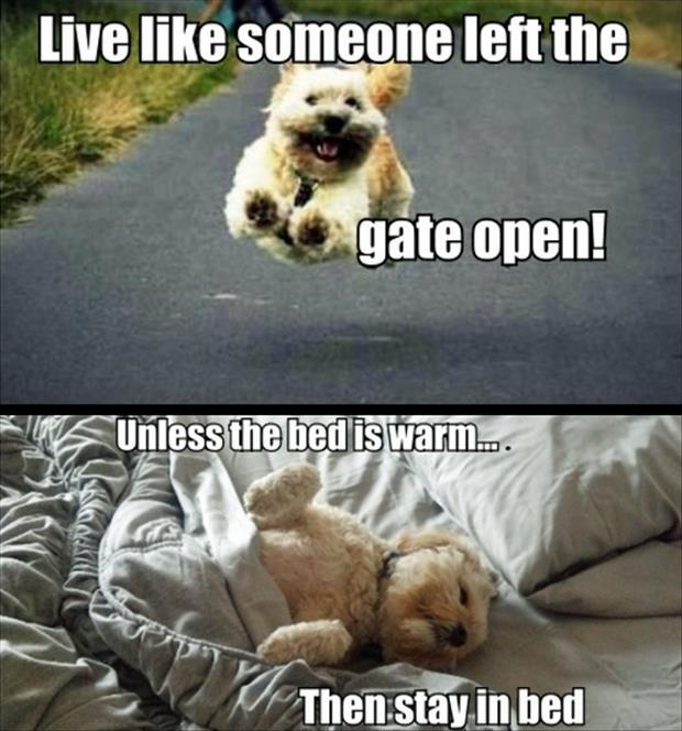 funny-pictures-how-to-live