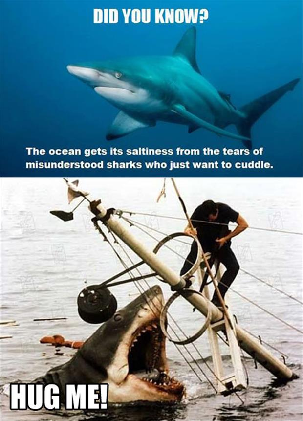 funny shark facts