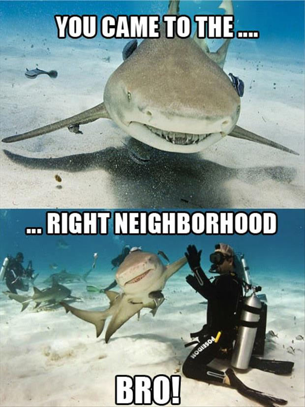 high five a shark