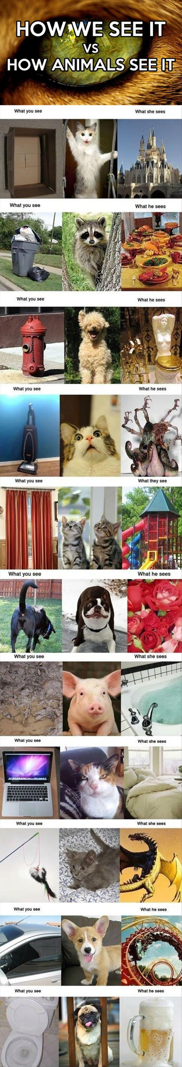 how we see it how animals see it