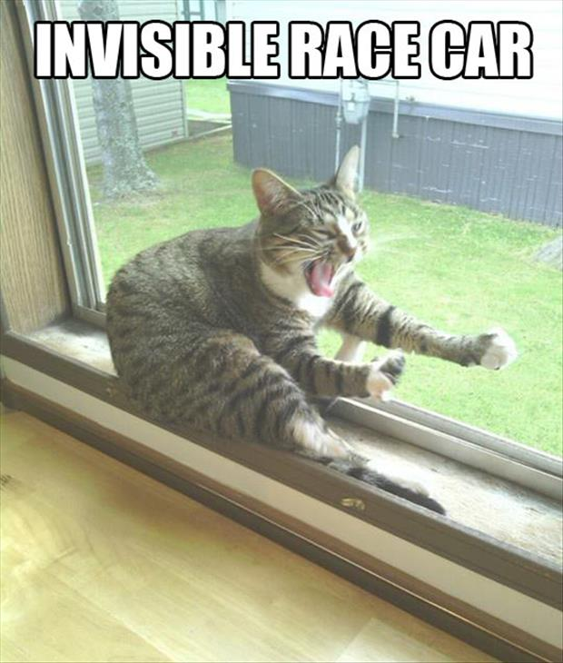 invisible cats