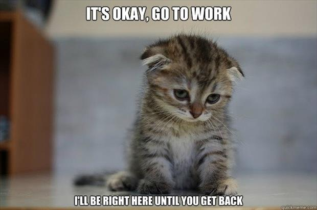 kitten makes you feel even worse on Monday