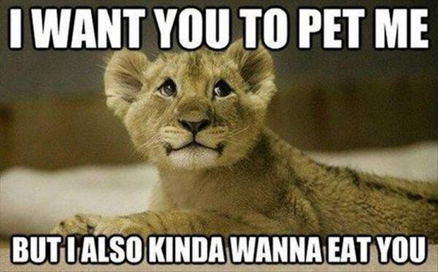lion funny pictures
