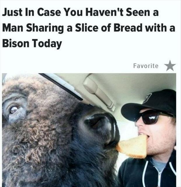 man sharing bread with bison