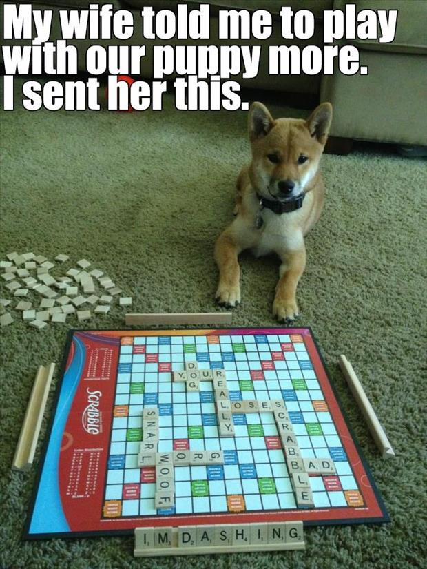 playing scrabble with dog