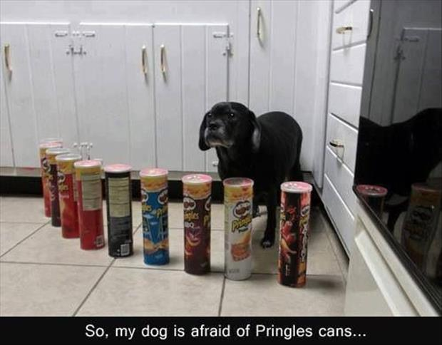 so my dog is afraid of pringles cans