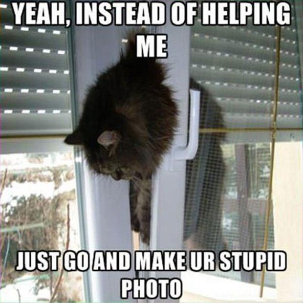 stuck cat pictures, dumpaday (14)