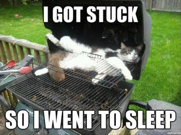 stuck cat pictures, dumpaday (6)