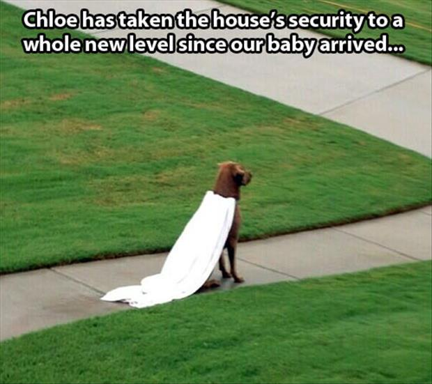 superhero dog funny pictures